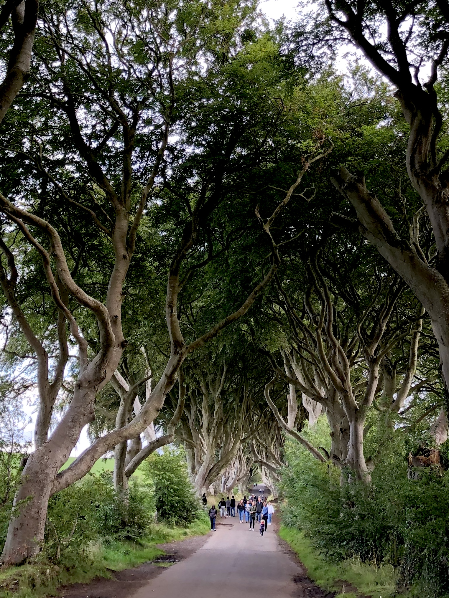 Dark Hedge Road Northern Ireland - Giddy Guest